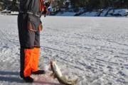 fin-fangst