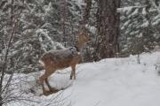 god-morgen-i-skogen-4
