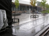 snaroydagen-2010-5
