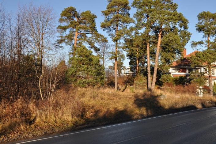 Mortenskogen