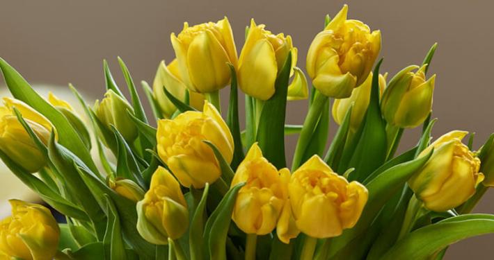 Krise for gartneriene, men påske-glede for deg! 1